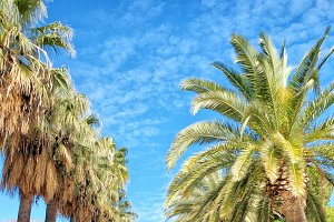 Palm tree promenade. Valencia, Spain