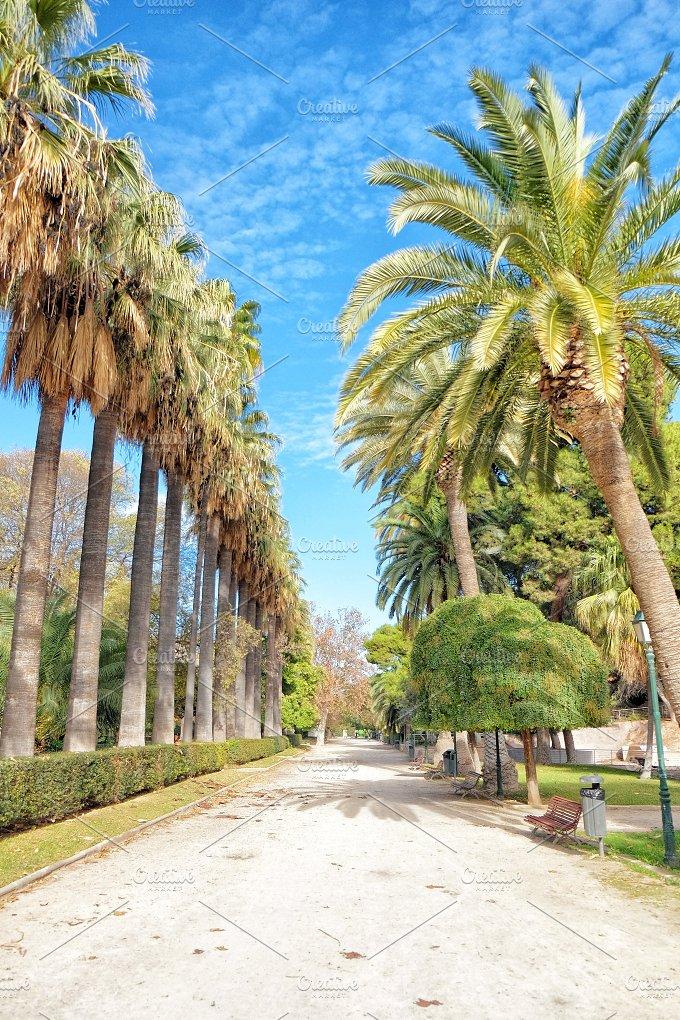 Palm tree promenade. Valencia, Spain - Nature