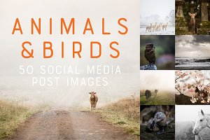 50 Social Media Backdrops - Animals