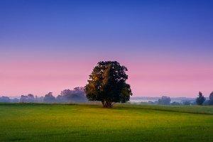 Alone magic tree on the field