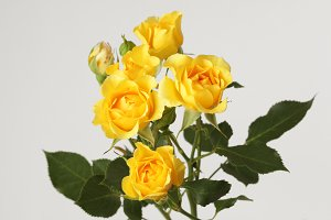 Yellow roses flower bouquet