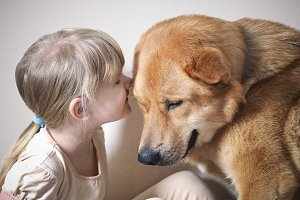 The little girl whispers something in the ear of a huge dog