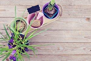 Spring garden routine concept