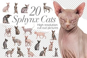 20 Sphynx Cats - Cut-out Pictures