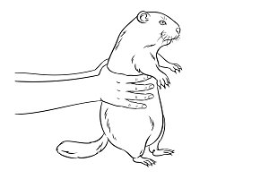 Groundhog in hands coloring book vector