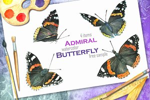 "Butterfly ""Admiral"""