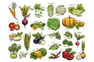 Isolated set vegetables harvest for vegan market