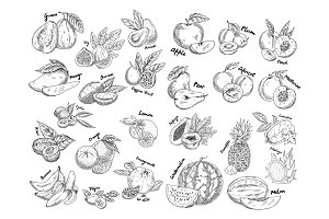 Set of isolated sketches of exotic, tropical fruit