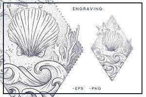 seashells. style engraving