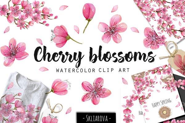 Cherry blossoms. Watercolor clip ar…