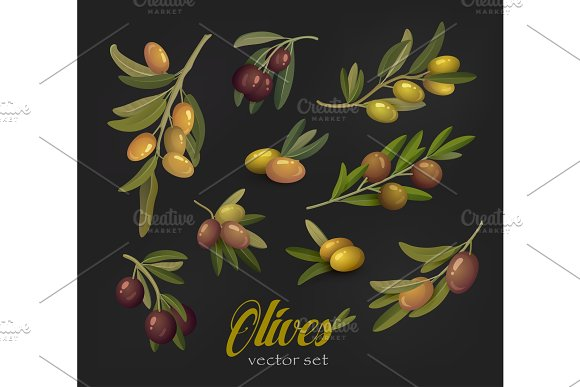 Set Of Olive Branches Or Tree Twigs Berries