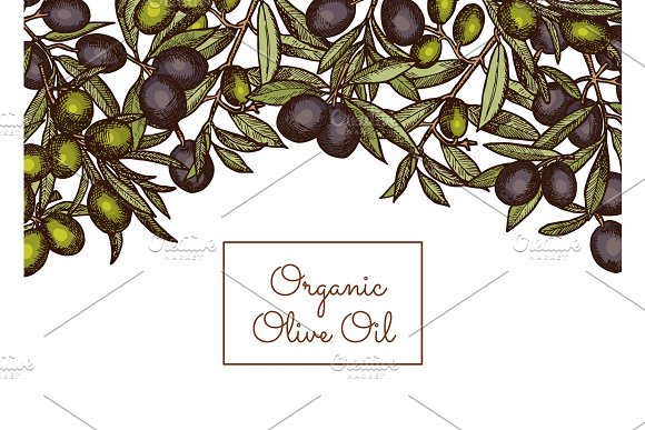 Vector Illustration With Place Text And Hand Drawn Olive