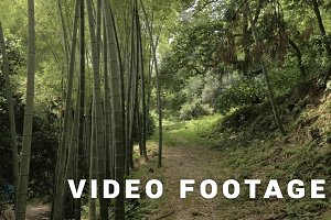 Bamboo alley in tropical rainforest at summer day in park - Batumi, Georgia