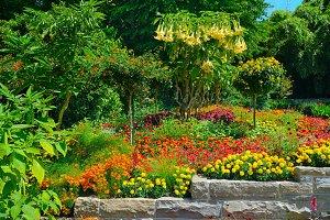Colorful blooming flowerbed