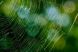 Spiderweb on blurred background