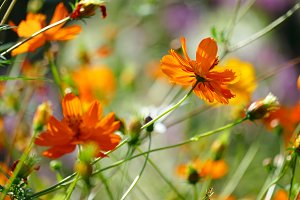Orange flowers violets