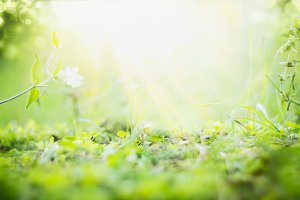 Sunny summer nature background