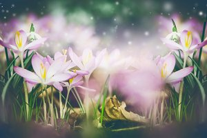 Beautiful springtime blooming
