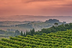 Fields of Tuscany
