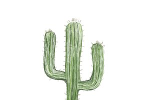 Illustration of hand drawn cactus
