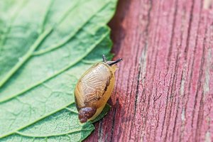 Little snail on leave