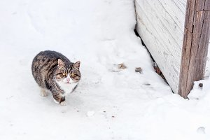 Adult multi colour cat in snow