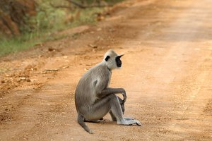 Monkey sitting by the roadside