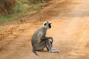 Monkey sitting by the roadside