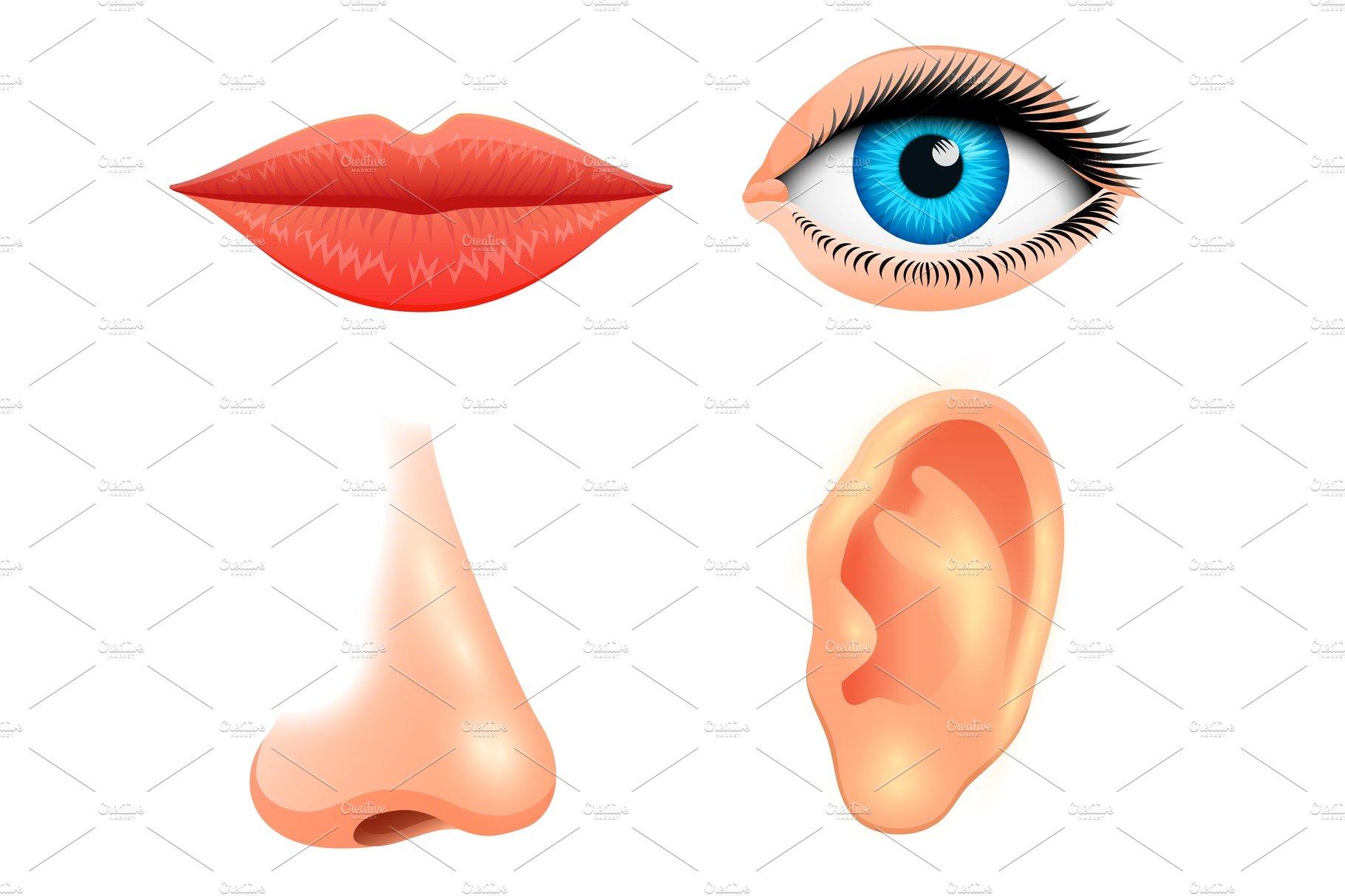 Human Biology Sensory Organs Illustrations Creative Market
