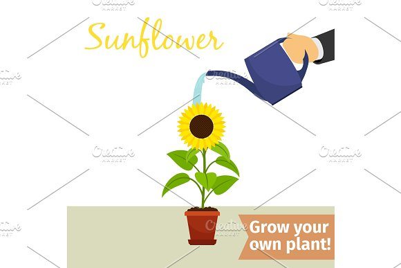 Hand Watering Sunflower Plant