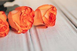 Beautiful orange roses with copy spa