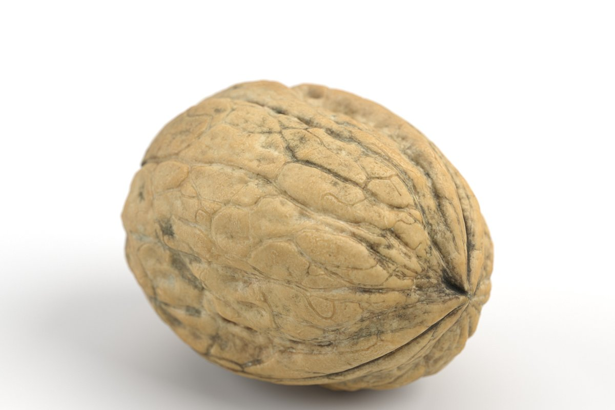 Photorealistic Walnut 01