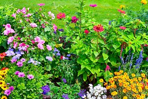 Blossoming flowerbeds