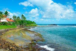 Ocean beach with palm trees