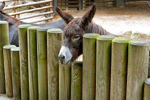 Donkey behind