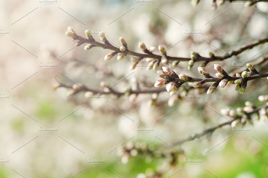 Apricot flower bud on a tree branch branch with tree buds nature apricot flower bud on a tree branch branch with tree buds nature mightylinksfo
