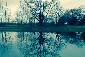 Tree Reflected on Blue Lake - Photo