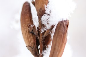 Snowy Dry Plant Fruit Branches.