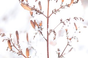 Snowy Dry Plant Branches Landscape.