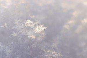 Frost Snowflake Texture. Macro.