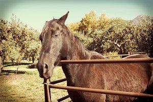 Instagram Farm Horse