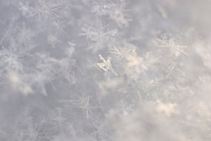 Shiny Snowflakes Texture. Macro.