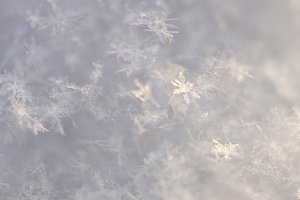 Beautiful Snowflakes Texture. Macro.
