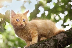red kitten hunging for birds on tree