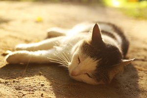 cat lay on summer siesta close up outdoor photo