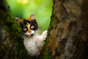 three colored she kitten on the tree summer garden  background