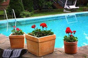 pot plants on swimming pool border design