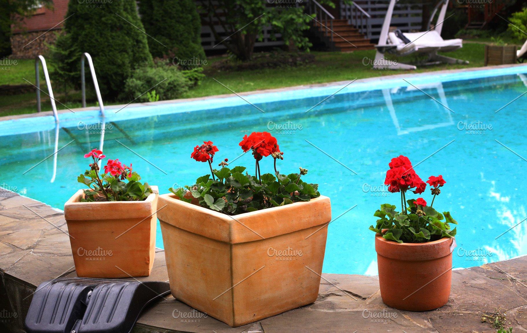 Pot Plants On Swimming Pool Border Design High Quality Nature