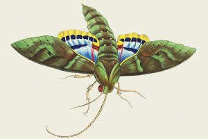 Illustration of insect (PSD)