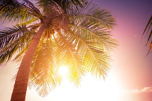 Sunset at tropics with palm trees
